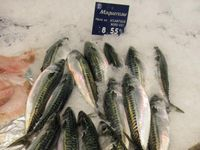 Makrelen in einem französischen Fischgeschäft Quelle: (Foto: Jens Ulleweit/Thünen-Institut) (idw)