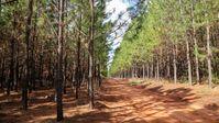 10.000 Hektar eigene Wälder als nachhaltige und nachwachsende Rohstoffquelle