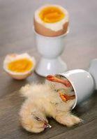 Grausamer Tod für menschliche Essensgelüste. Bild: Haike Strate/PETA