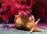 Kalifornischer Seehase: Lebende Zellen für Robotereinsatz. Bild: wikipedia.org