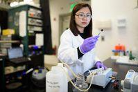 Chong Liu bei Tests von Uran-Einfangfasern. Bild: L.A. Cicero/SU