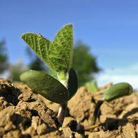 Bild: agrarfoto.com / WWF