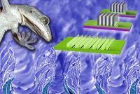 Gecko-Vorbild: Feinste Stege sorgen für starke Haftung.
