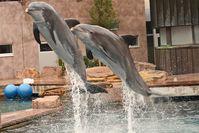 Delfine im Nürnberger Tiergarten gequält? Bild: WDSF (pressrelations)