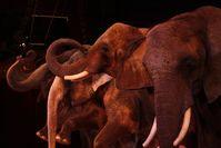 Elefantendressur in einer Zirkusvorstellung