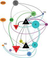 Mit Diagrammen wie diesem halten die Forscher fest, wie die einzelnen Neuronen mit ihren Nachbarn verbunden sind. Quelle: Abbildung: CIN (idw)