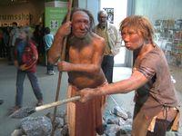 Neandertaler: Rekonstruktion im Neanderthal Museum