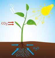 Ohne CO2 gibt es kein Leben auf der Erde (Symbolbild)