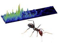 Ameisen und Wellen - gibt es da Ähnlichkeiten? Quelle: TU Wien / Fir0002/Flagstaffotos, GNU Free Documentation Licence 1.2 (idw)