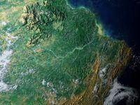 Regenwald am Amazonas: Artenvielfalt in Gefahr. Bild: pixelio.de, Dieter Schütz