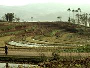 Ohne Wasser liegen die Terrassen am Jangtse trocken. © Mauri Rautkari / WWF-Canon