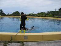 Loro-Park Orca (Foto WDSF)