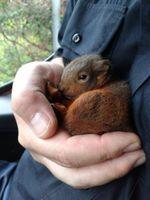 Einchhörnchenrettung Bild: Feuerwehr Ratingen