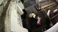 Horror Schweinemast: Wie Jahr für Jahr Millionen Tiere brutal entsorgt werden