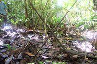 Gekreuzte Speere unkontaktierter Indigener wurden in der Region gefunden, in der Repsol erkundet. Bild: Marek Wolodzko/Survival