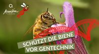 """Aurelia Stiftung startet Informations- und Petitionskampagne """"Schützt die Biene vor Gentechnik"""". Mehr Infos: www.biene-gentechnik.de  Bild: """"obs/Aurelia Stiftung/© Smellme - Dreamstime.com"""""""