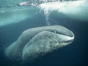 © naturepl.com / Martha Holmes / WWF
