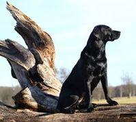 Wachhund: Twitter im Visier. Bild: pixelio.de, Oliver Haja