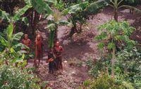 Diese Luftaufnahme von 2011 zeigt ein unkontaktiertes Amazonas-Volk in Brasilien nahe der peruanischen Grenze. Bild: © BBC/FUNAI/Survival