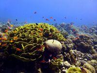"""Unterwasserlandschaft am Forschungsstandort im nördlichen Roten Meer in der Nähe von Aqaba, Jordanien. Quelle: """"Foto: Ulisse Cardini"""" (idw)"""
