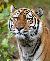 Bild: Viktor Filonov / WWF