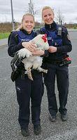 Huhn auf dem Hahnen