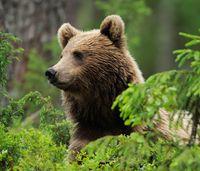 Bild: Wild Wonders of Europe / Staffan Widstrand / WWF-Canon