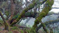 """Der Wald im Bale-Mountains-Nationalpark in Äthiopien ist ein enorm wichtiger Wasserspeicher. Bild: """"obs/ZDF/Axel Gomille"""""""