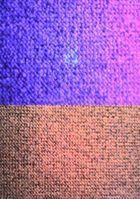 Sperma unter Ultraviolett-Bestrahlung (oben) und unter normaler Beleuchtung (unten)