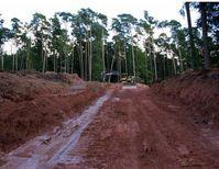 Öko-Jobs: Hier bei der Rodung von Wäldern für Windkraftanlagen: Etwa 1,73ha pro Windkraftanlage (Symbolbild)