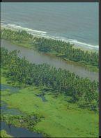 Küstenvegetation schwächt Tsunami-Wellen ab. Bild: Universität Hohenheim