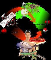 Übersicht über die Photosynthese und Atmung