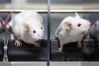 Bild: Menschen für Tierrechte – Bundesverband der Tierversuchsgegner e.V.