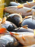Fischerei, Fischen und Fische (Symbolbild)