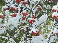 Erster Schnee auf dem Hohenpeißenberg Bild: Ulf Köhler, DWD