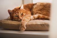 """Bild: """"obs/Bundesverband für Tiergesundheit e.V./Foto: BfT/Grigoreva/Shutterstock"""""""