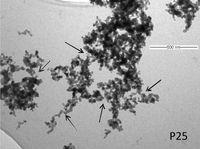 Titandioxid-Nanopartikel unter dem Elektronenmikroskop. Quelle: (Foto: Universität Wien) (idw)
