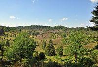 Natur: Sauerstoff kann es auch ohne Bäume geben. Bild: roja48, pixelio.de