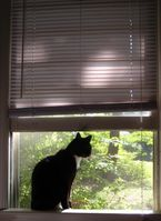Besteht für Katzen die Gefahr eines Sturzes, müssen Fenster und Balkone gesichert werden. Quelle: Foto: Christina Braun (idw)
