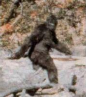 Am bekanntesten ist ein 1967 von Roger Patterson und Robert Gimlin veröffentlichter 16-mm-Film, der ein kryptozoologisches Wesen zeigt, das nach Meinung von Skeptikern ein Mensch in einem Gorillakostüm ist. Im Dezember 2002 erklärte Michael Wallace[4], der Sohn des verstorbenen Holzfäller-Unternehmers und Bigfoot-Forschers Ray L. Wallace, dass sein Vater seit ca. 1958 Bigfoot-Fußspuren mit aus Holz geschnitzten Füßen gelegt habe.  Bild: Patterson-Gimlin film / wikipedia.org