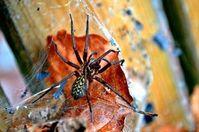 Spinne: inspiriert die Wissenschaft. Bild: pixelio.de/Bianca Schütte