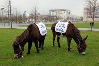 Absurde Mehrwertsteuer - 7% auf Pferde, 19% auf Esel