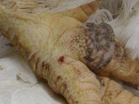 Haltungsbedingte Erkrankungen wurden bei verstorbenen Tieren nachgewiesen Bild: © PETA