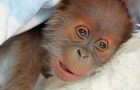 Bild: Zoologischer Garten und Tierpark Berlin