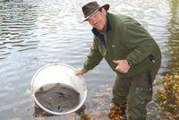 Fischbesatz Quelle: Foto: IGB (idw)