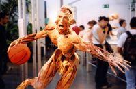 Körperwelten: Exponat der Ausstellung