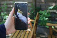 So sieht der gestohlene Kakadu Rocky aus. Bild: Polizei Dortmund