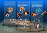 Besiedlung von Holz in der Tiefsee und die Ausbildung sulfidischer Nischen am Meeresboden Quelle: © Bienhold et al., PLoS ONE 8(1): e53590) doi:10.1371/journal.pone.0053590 (idw)