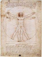 """""""Proportionsschema der menschlichen Gestalt nach Vitruv"""" von Leonardo da Vinci."""
