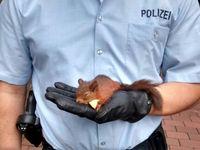 Eichhörnchen Bild: Polizeipräsidium Recklinghausen